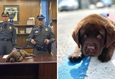 K-9 Puppy Adorably Sleeps Through His Entire Swearing-In Ceremony
