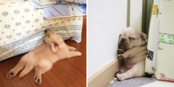 10+ Hilarious Pics That Prove Dogs Can Fall Asleep In The Most Awkward Positions