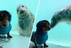 Dachshund And Seal Become Best Friends At First Sight