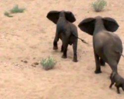 Baby Elephant Is Ambushed By Wild Dogs, Frantic Elephant Mama Calls For Backup