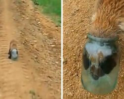 Baby Fox Gets His Head Stuck In A Jar & Suffocates, Approaches Human For Help