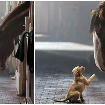 Clydesdale & Labrador Puppy Reunite In New Heartfelt Budweiser Commercial