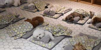 Doggy Daycare Shares Adorable Photos Of Pups Sleeping Together