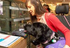 Assistance Dog Helps Disabled Lady By Taking Care Of The Entire Payment Process