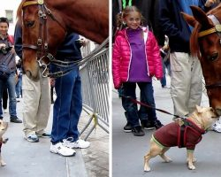 """Overexcited Frenchie Thinks Police Horse Is A """"Huge Dog"""" & Begs Him To Play"""