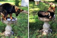 "Family Discovers A ""New Kind Of Bird"" Drinking & Cooling Off In Their Bird Bath"