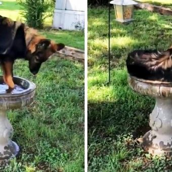 """Family Discovers A """"New Kind Of Bird"""" Drinking & Cooling Off In Their Bird Bath"""