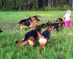 """5-Year-Old Runs Into Open Field & 14 Large German Shepherds Begin """"Chasing"""" Her"""