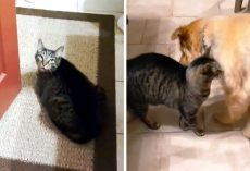 "Cat Weeps Beside The Door After His Blind Dog Best Friend Abruptly ""Disappears"""