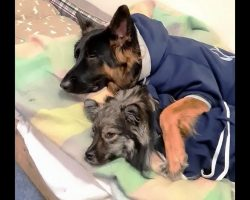 Puppies Stuck In Lockdown & Isolation Find The Coziest Way To Spend Their Time