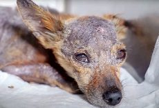 Three Diseases Were Slowly Killing Her & Her Tiny Weak Body Had Given Up