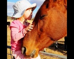 """Horse Comes Running Every Time 3-Year-Old Girl Starts Singing """"Heal The World"""""""