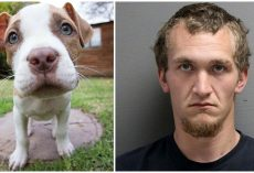 Angry Man Kills Girlfriend's Puppy For 'Chewing On His New Xbox Headset'