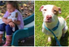 Little Girl Spends A Year Trying To Find Dog Someone Stole From Her Front Yard
