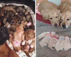 10+ Heartwarming Pics Of Proud Dog Parents Posing With Their Newborn Puppies