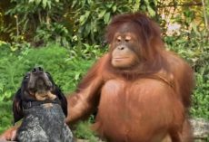1-Minute Animal Compilation of 'Unlikely' Friends Coming Together, Humans Should Take Notes