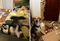 "25 Times ""Innocent"" Dogs Were Caught Red-Handed"