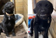 Shelter Puppy Hoping To Land A Forever Home Sits And Smiles At Everyone Who Passes By