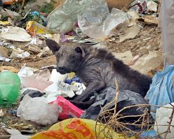 When He Grew Sick, His Family Dumped Him On The Streets To Live Amongst Garbage