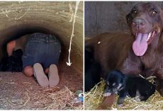 She Had To Keep Her 12 Babies Safe So She Carried Them In Tunnel & Waited For Help