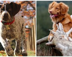 Sheriff Advises Public To Keep An Eye On Dogs After Many Poisonings Reported