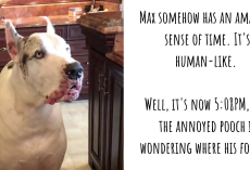 Dinner Is Late, And Max The Great Dane Is One 'Unhappy' Dog