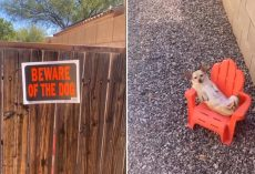 Family's 'Guard Dog' Seen Sleeping On The Job
