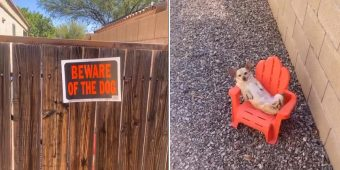 Family's 'Guard Dog' Seen Sleeping On The Job