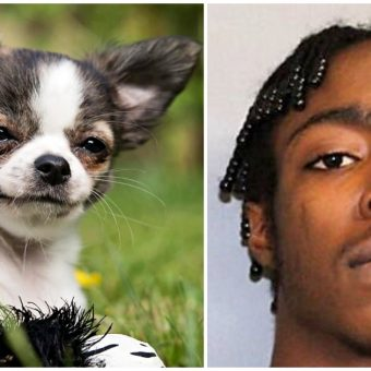 Teen Stomped His Family's Chihuahua To Death, Then Dumped Her Body At The Shore