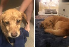 Man Wakes Up To Find An Unfamiliar Dog Needing Help In His Living Room, Ends Up Adopting Her