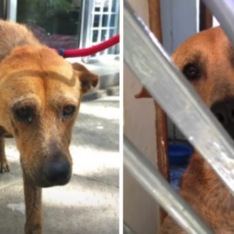 Sad Dog Who Cried In The Shelter All Day Can Now Sleep With A Smile