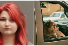 Dog Dies Inside Hot Car After Teenager Rolls Windows Up, Locks It & Walks Away