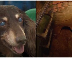 15-Year-Old Blind & Deaf Dog Fell Into Sewer, Cops Get Down & Dirty To Save Her