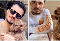 Orlando Bloom Is Broken Over Disappearance Of His Beloved Dog, Offering Reward