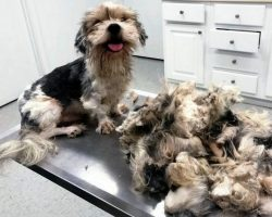 """They Pick Up """"Ugly"""" Dog With Dreadlocks & Transform Him Into A Stunner In 3 Hrs"""