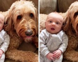 "Mom Asks Dog If He Loves His Baby Brother & The Dog Passionately ""Replies"" Back"