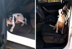 Cops Return To Patrol Car To See An Abandoned Dog Waiting Inside For Assistance