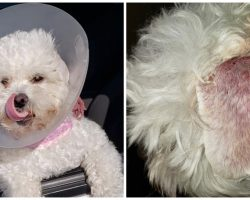 Woman Suing PetSmart, Says Groomer Almost Killed Her Emotional Support Dog
