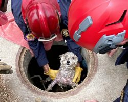 Pup Who Went Missing From Home A Month Ago Is Found In 18-Ft Deep Drainpipe