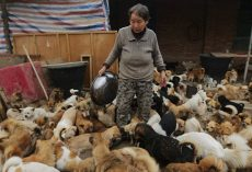 These Elderly Chinese Women Have Been Waking Up Every Day At 4AM To Feed 1,300 Stray Dogs