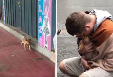 Tiny Stray Puppy Wagged Her Tail Every Time Someone Passed Her Hoping To Be Adopted