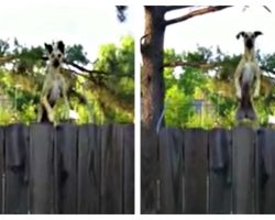 Neighbors Heard Noises On A Trampoline So They Quickly Recorded It On Camera