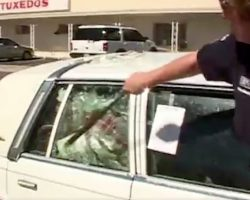 7 Dogs Were Trapped In A Hot Car For Days When Police Arrived On Scene