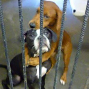 Shelter Dog Hugs Her BFF Hours Before Euthanasia And Saves Their Lives
