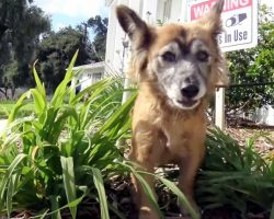 """Dog Dumped In A Cemetery Was """"Guarded By Angels"""" Till Her Heroes Came For Her"""