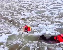 US Coast Guard Pushes Through 200 Feet Of Solid Ice Chunks To Save Stranded Dog