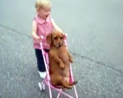 """Toddler Thinks Puppy Is Her """"Baby"""", Puppy Doesn't Want To Break Her Heart"""