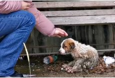 Woman Held Back Sobs As She Reached Out To Pup Caked In Mud & Waste