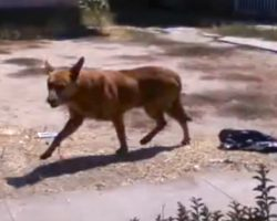 Dog Stayed By His Home For 2 Months After His Owners Moved Away And Left Him