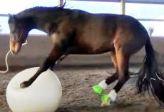 "Horse Who Loves To Play Fetch ""Loses His Mind"" When Mom Gives Him A Giant Ball"
